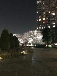 tsukisima1